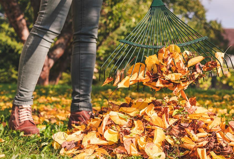Utiliser les feuilles mortes au jardin..